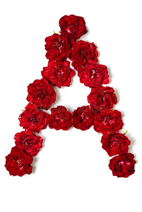 Letter A From Flowers Of Red Rose Stock Photo Image Of Isolated Bloom 128931138 Find the best free stock images about roses. letter a from flowers of red rose stock