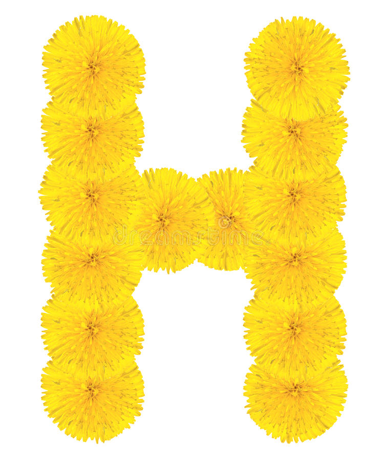Letter H made from dandelions stock photography