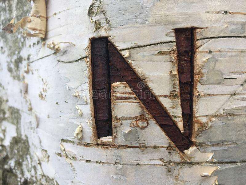 Letter N carved into the birch tree. Brown alphabet letter N on the white bark of a living tree in nature stock photos