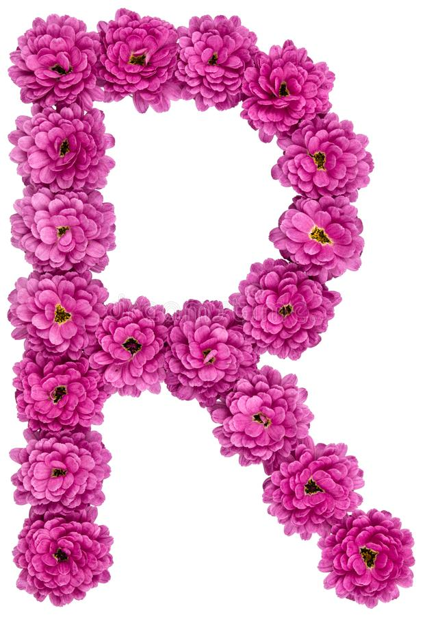 Letter r alphabet from flowers of chrysanthemum isolated on wh download letter r alphabet from flowers of chrysanthemum isolated on wh stock photo altavistaventures Choice Image