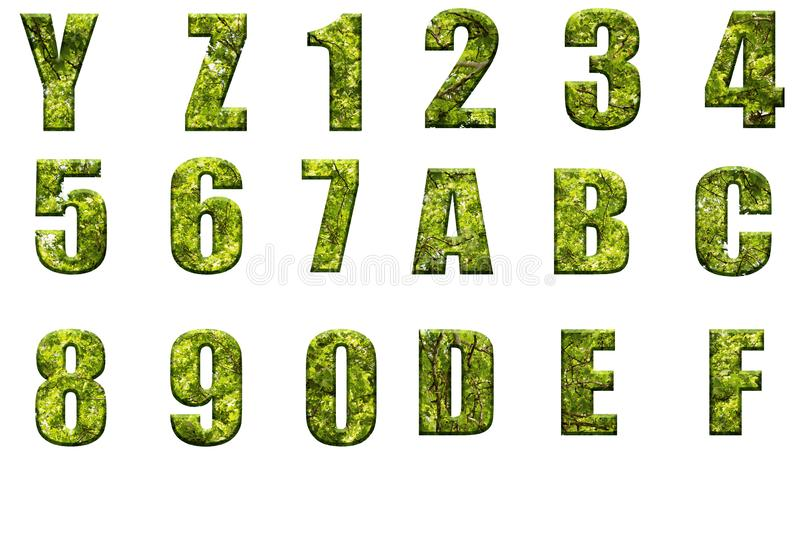 Letters of the alphabet from real leaves. Alphabet letters and numbers from leaves and tree branches.Volumetric letters from eco material vector illustration
