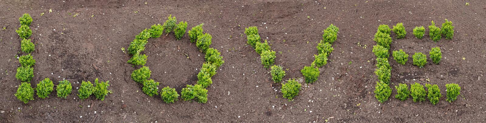 Letters made of living plants forming the word love stock photos