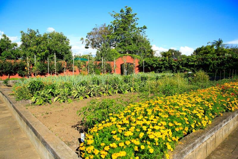 Letti di fiore alzati in orto domestico fotografia stock libera da diritti
