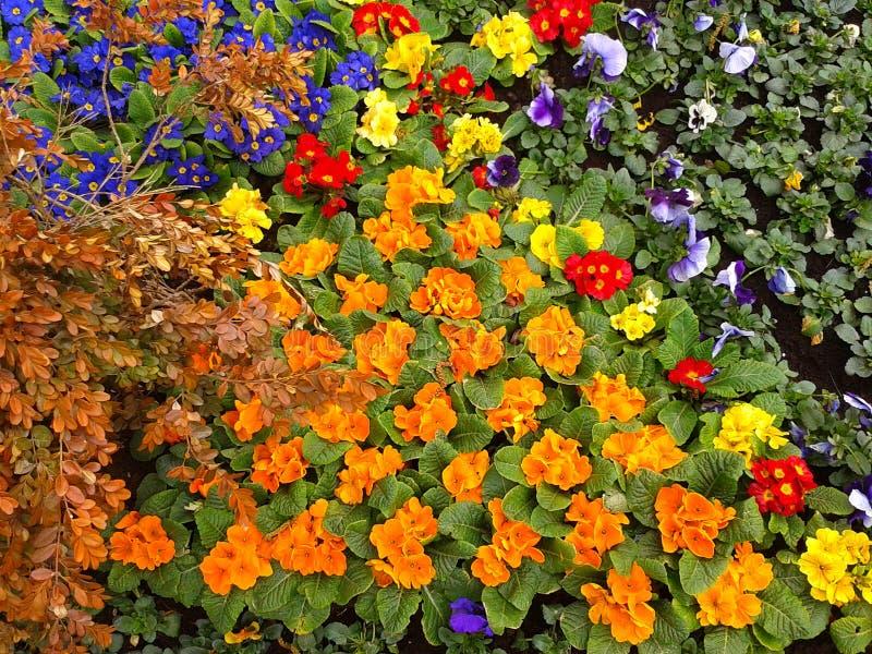 Letti di fiore luminosi, abbellenti immagine stock libera da diritti