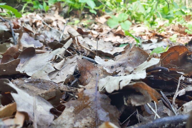 Lettiera e vecchie foglie sulla terra immagini stock libere da diritti