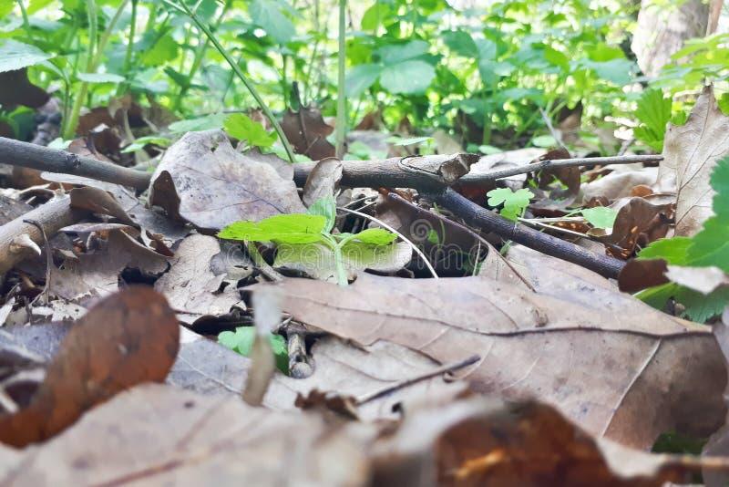 Lettiera e vecchie foglie sulla terra immagine stock