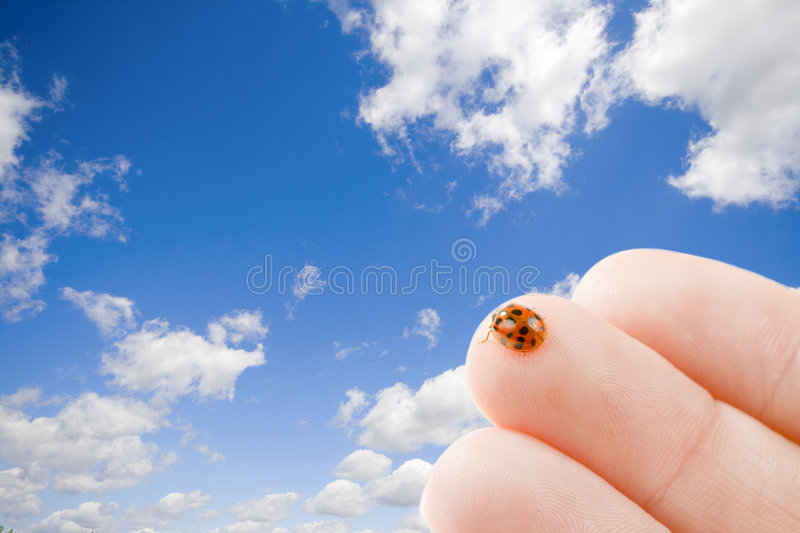 Download Letting go stock photo. Image of close, concept, background - 5741318
