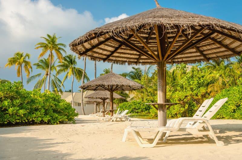 Lettini ed ombrelli della palma su un fondo delle palme esotiche, Maldive immagini stock libere da diritti