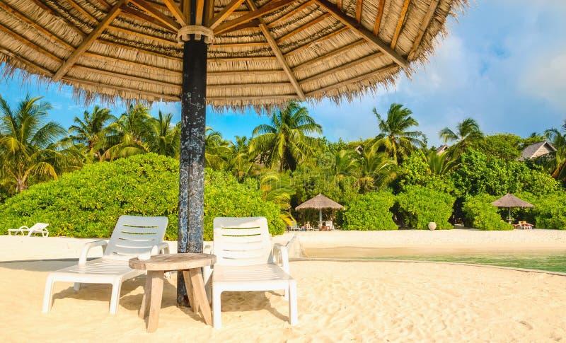 Lettini ed ombrelli della palma su un fondo delle palme esotiche, Maldive immagine stock