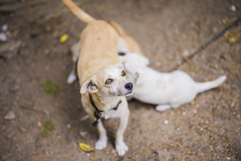 Download Lettle Dog Nursing Puppy Stock Image - Image: 37090701