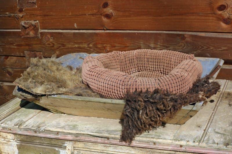 Letto accogliente molle per un gatto rustico vicino ad una casa di legno immagine stock libera da diritti