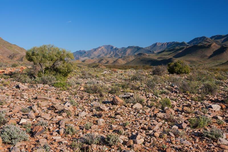 Letto arido del deserto fotografie stock