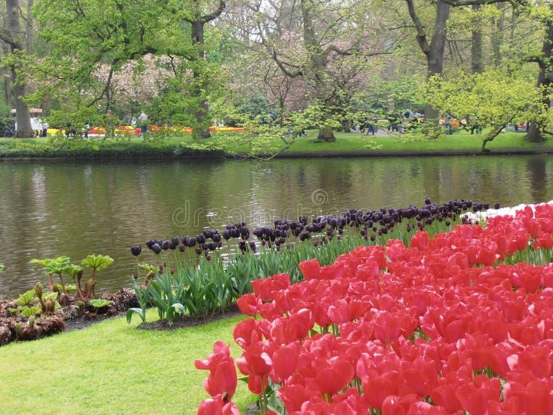 Letto dei tulipani fotografia stock libera da diritti
