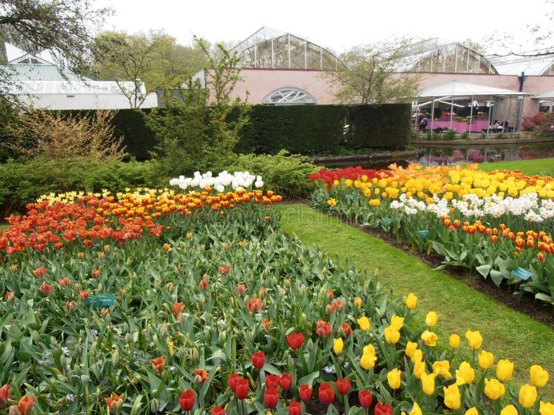 Letto dei tulipani fotografia stock