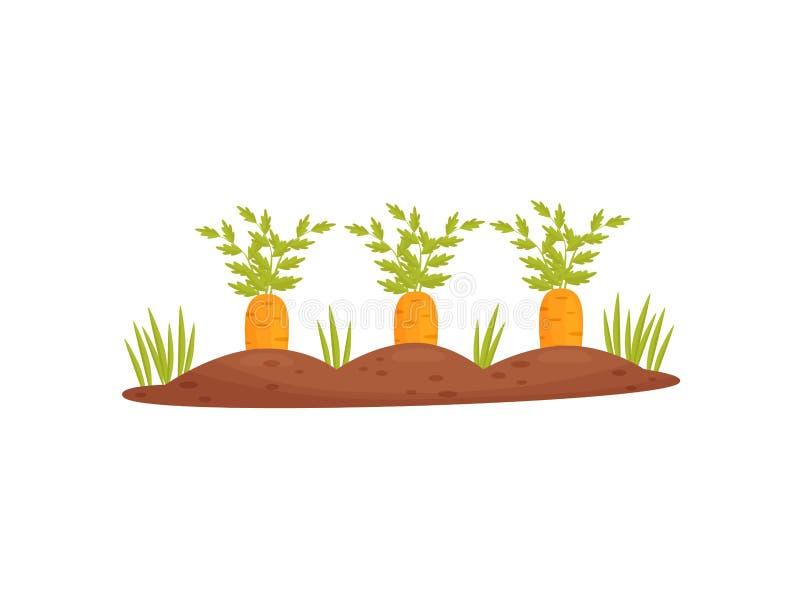 Letto del giardino del fumetto con le carote su un fondo bianco Illustrazione di vettore illustrazione di stock