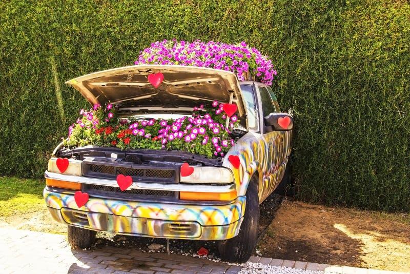Letto delle petunie in un'automobile con un cappuccio aperto nel giardino di miracolo nel Dubai fotografia stock libera da diritti