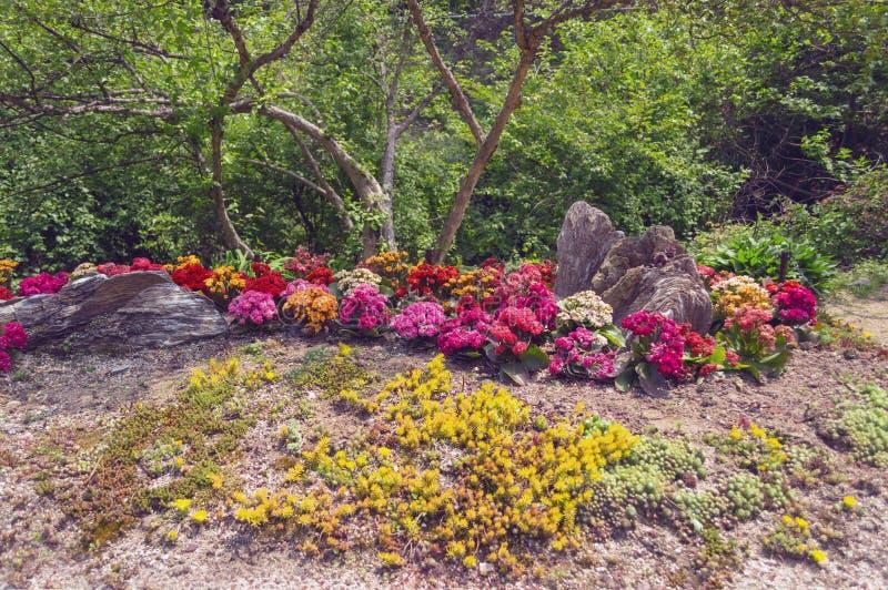 Letto di fiore dei succulenti decorati con le rocce fotografia stock