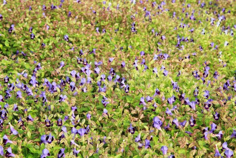 Letto di fiore in giardino fotografia stock