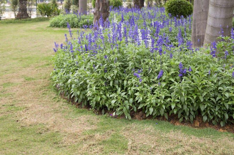 Letto di fiore intorno agli alberi nel parco del fiore fotografia stock