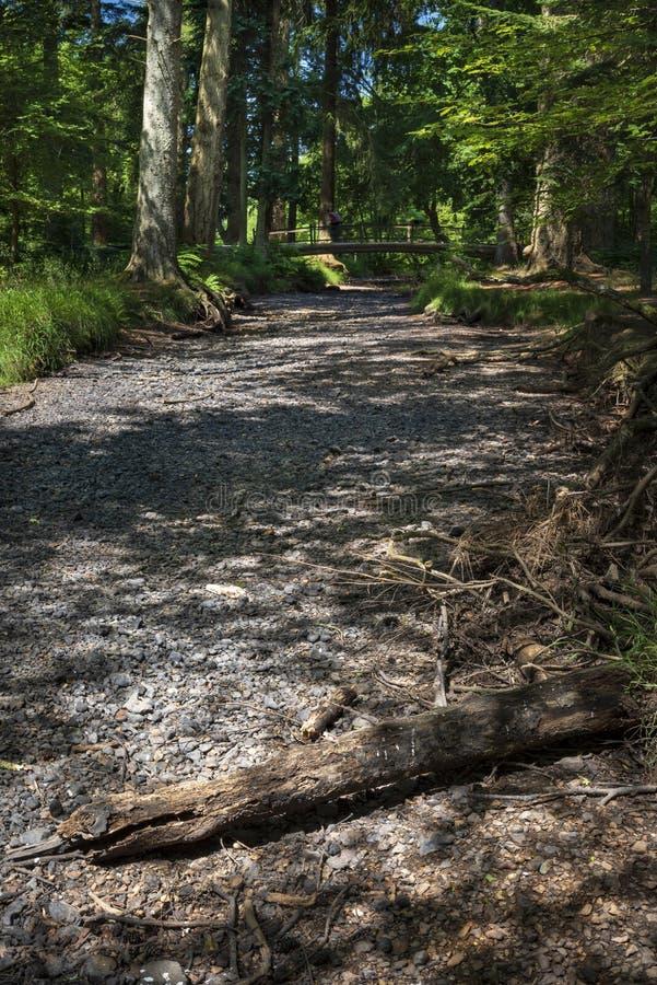 Letto di fiume inaridito nella nuova foresta immagini stock