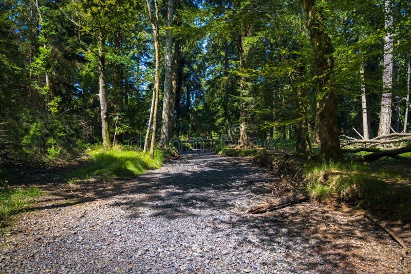 Letto di fiume inaridito nella nuova foresta fotografia stock libera da diritti