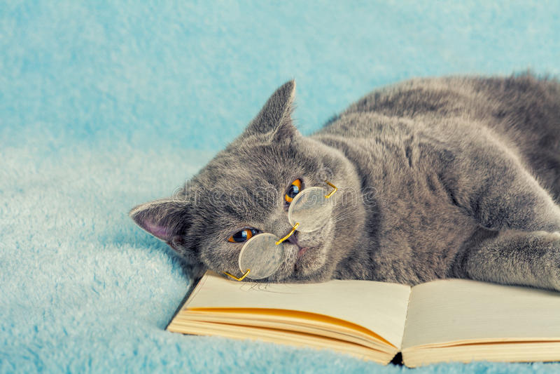 Lettore del gatto fotografia stock immagine di lanuginoso - Immagine del gatto a colori ...