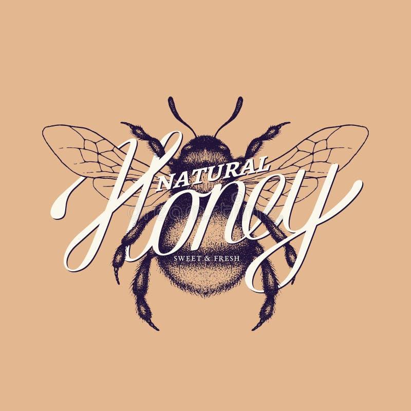 Lettrage de miel illustration libre de droits
