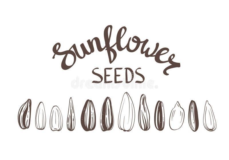 Lettrage stylisé de vintage d'affiche de graines de tournesol illustration stock