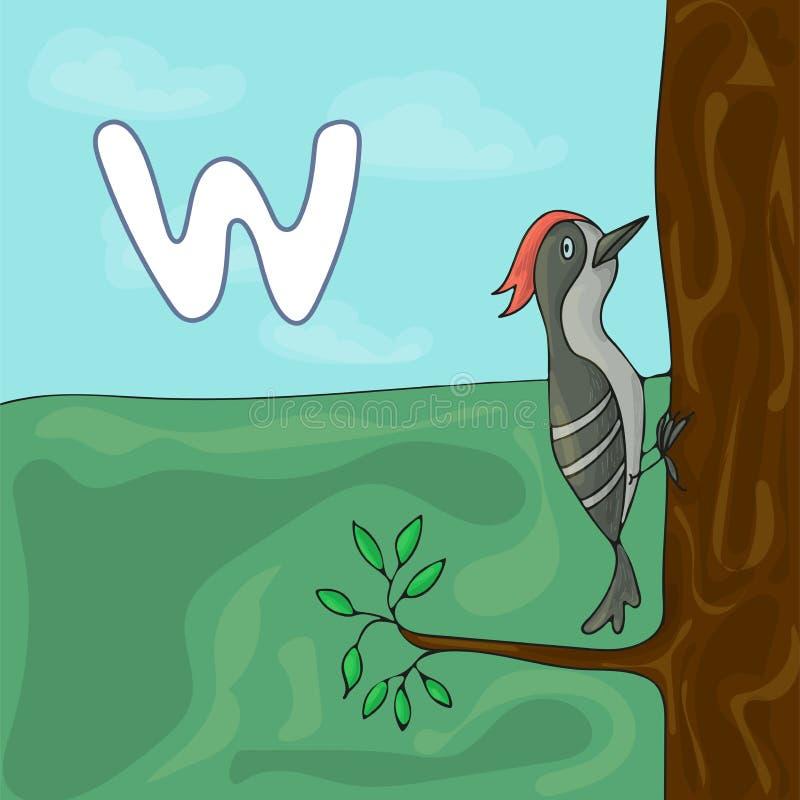 Lettre illustrée W d'alphabet et pivert Bande dessinée de vecteur d'image de livre d'ABC Caractère de pivert sur l'arbre illustration libre de droits