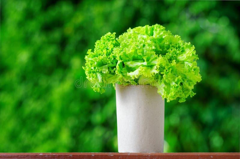 Download Lettuce Stock Image - Image: 25543411