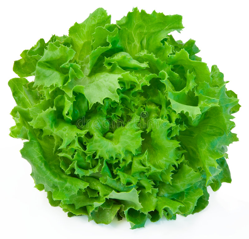 Free Lettuce Royalty Free Stock Photo - 3220935