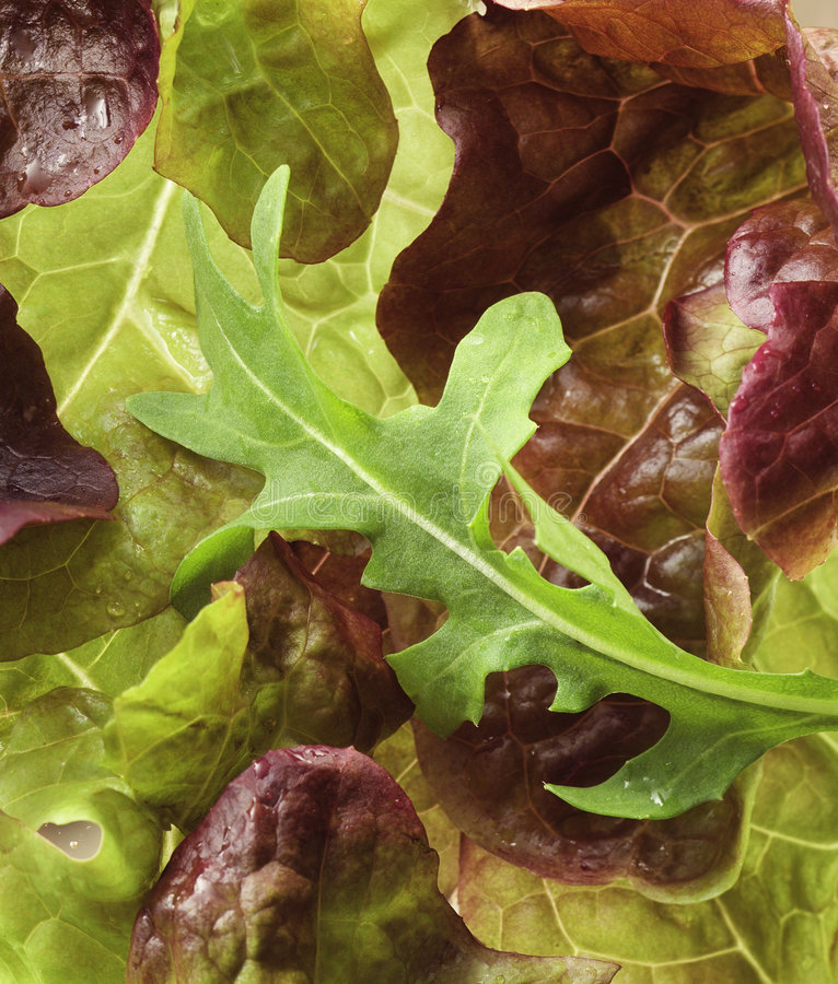 Free Lettuce Close-up Royalty Free Stock Images - 1018979