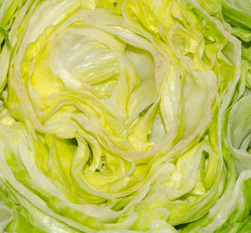 Download Lettuce stock photo. Image of leaves, cuisine, closeup - 30643922