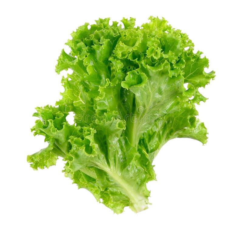 Lettuce isolated on the white background stock photo