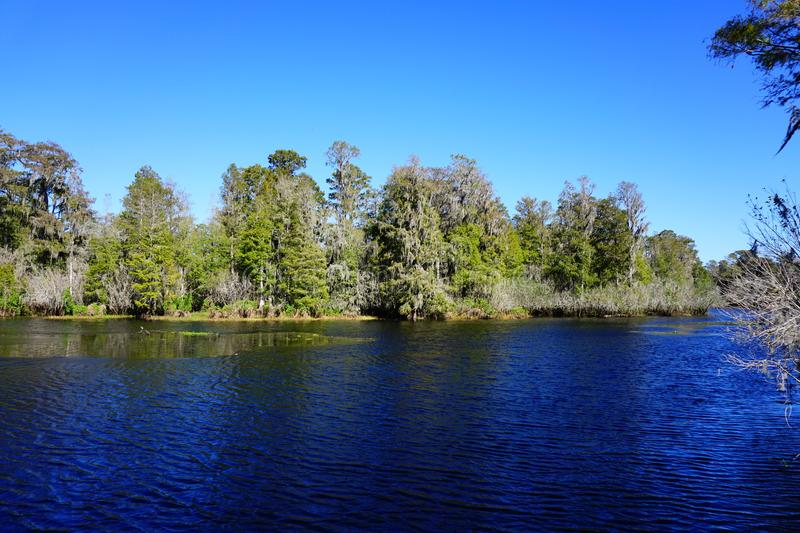 Lettuce lake. Taken in Tampa, florida stock images