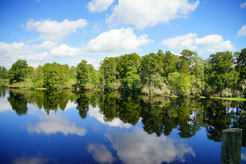 Lettuce lake. Taken in Tampa, florida royalty free stock photos