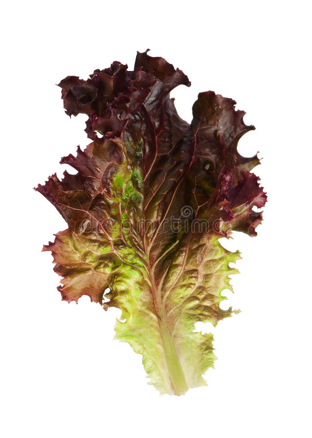 Download Lettuce leaf stock image. Image of ingredient, color - 26821531