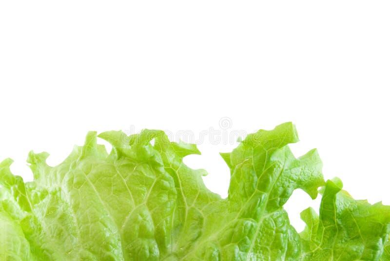 Download Lettuce Leaf stock photo. Image of lettuce, close, white - 7863844
