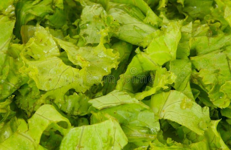 Download Lettuce leaves stock image. Image of food, background - 7310049