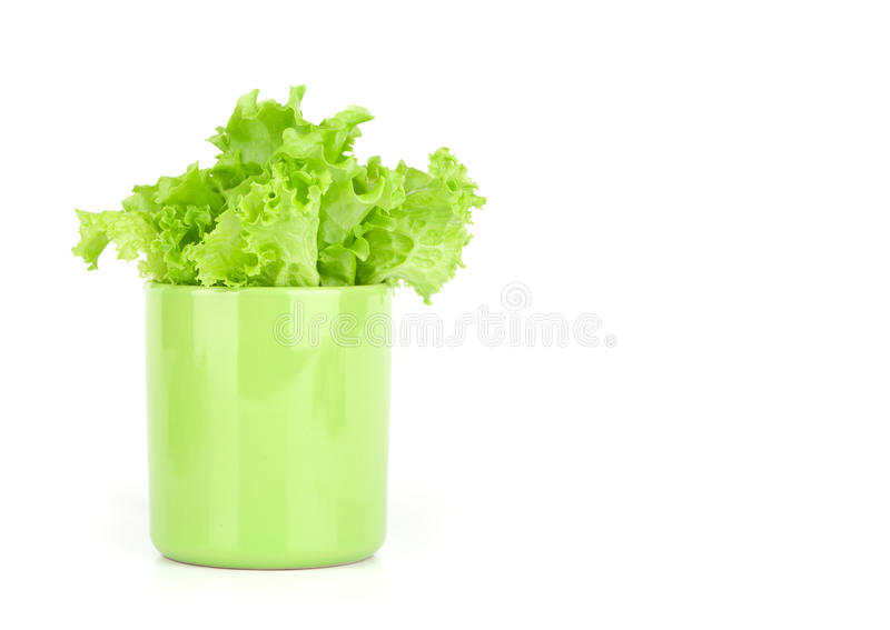 Download Lettuce leaves in a cup stock photo. Image of fresh, ingredients - 23553846