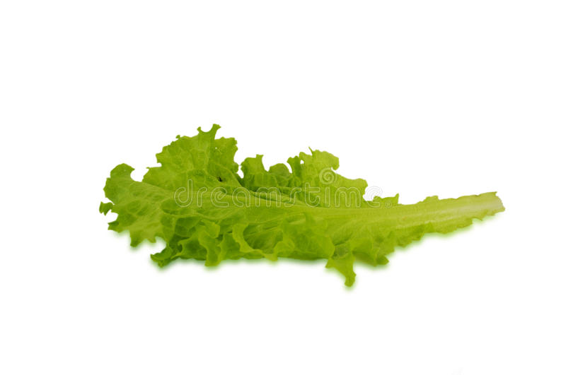 Lettuce leaves isolated on white background. stock photos