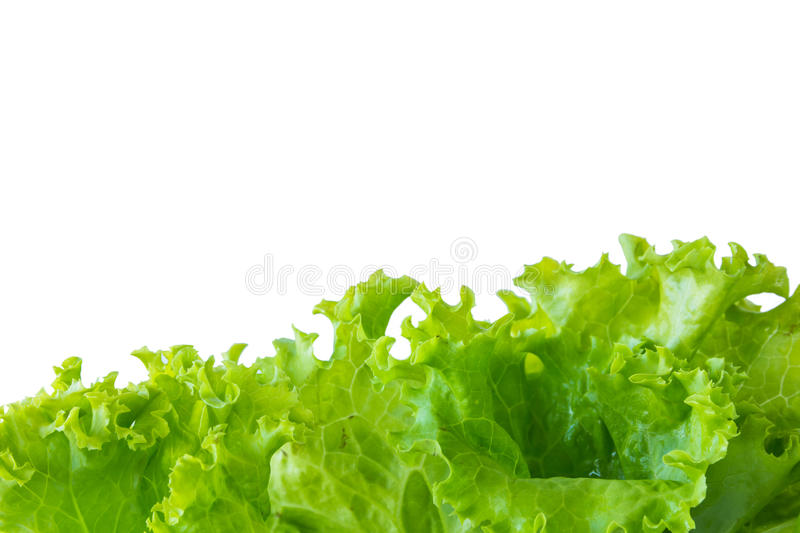 Lettuce and white background stock image