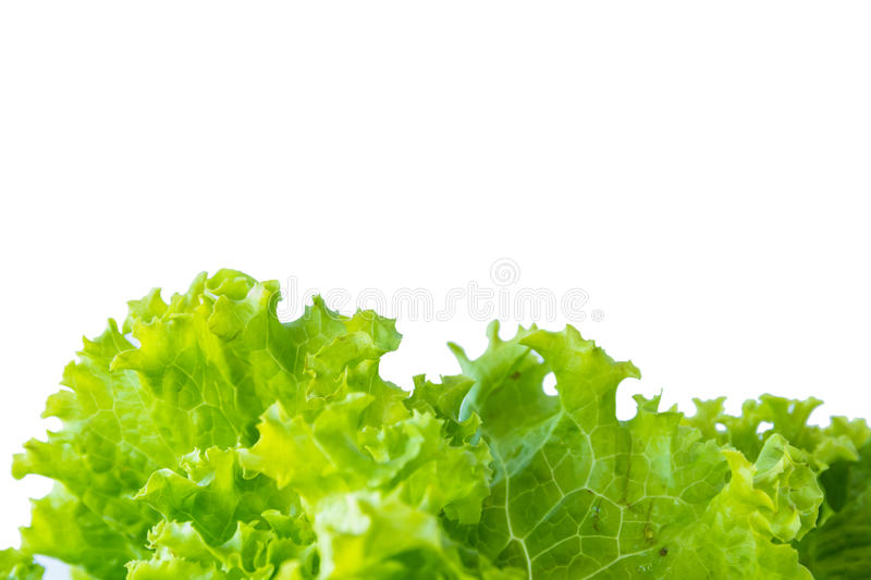 Lettuce and white background royalty free stock photography