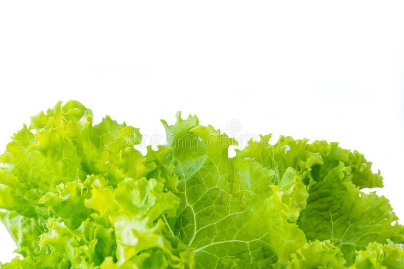 Lettuce and white background stock images