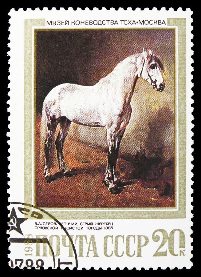 Letuchy, Grey Stallion della razza dello zampone di Orlov (V Serov, 1886), Cavalli nel serie delle pitture, circa 1988 immagini stock libere da diritti