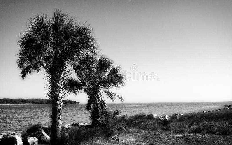 Letzte Palmen am Zusammenströmen der Savanne und des Atlantiks stockfotos