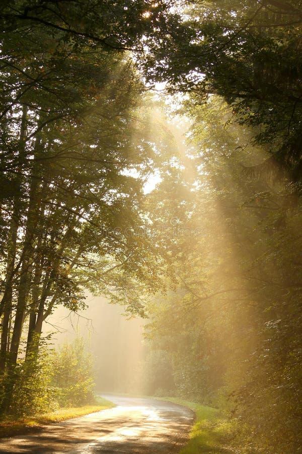 Leuchte der steigenden Sonne fällt in das Herbstholz stockbild