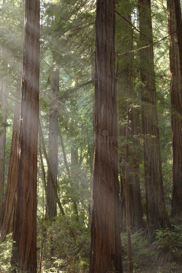 Leuchte durch die Bäume lizenzfreies stockbild
