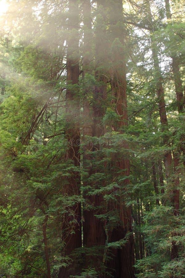 Leuchte durch die Bäume lizenzfreie stockbilder