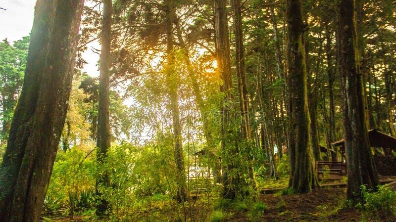 Leuchte im Wald lizenzfreie stockfotos